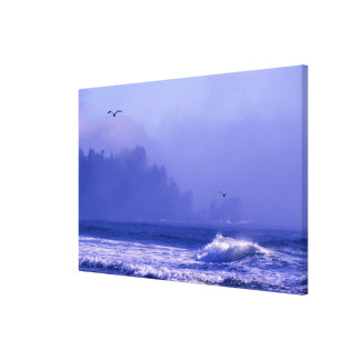 USA, Washington, Olympic National Park. Fog Canvas Print