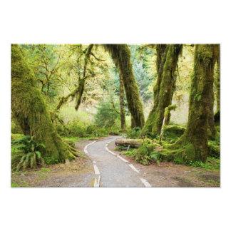 USA, Washington, Olympic National Park, Hiking Photograph