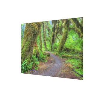 USA, Washington, Olympic National Park, Hoh Canvas Print