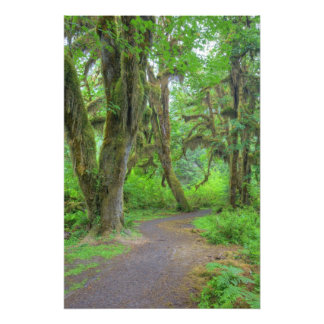 USA, Washington, Olympic National Park, Hoh Photo Print