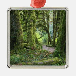 USA, Washington, Olympic National Park, Hoh Rain Christmas Ornament