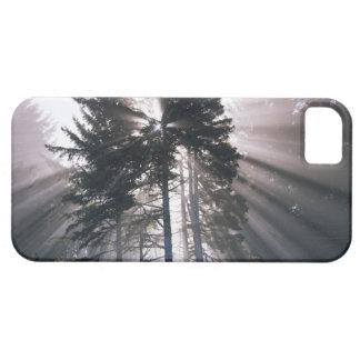 USA, Washington, Olympic National Park, Morning iPhone 5 Covers