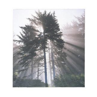 USA, Washington, Olympic National Park, Morning Notepads