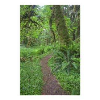 USA, Washington, Olympic National Park, Photo Print