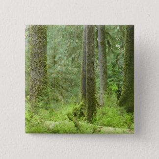 USA, Washington, Olympic National Park, Spring 3 15 Cm Square Badge