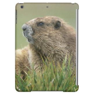 USA, Washington, Olympic NP, Olympic Marmot