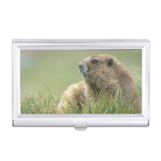 USA, Washington, Olympic NP, Olympic Marmot Business Card Holder