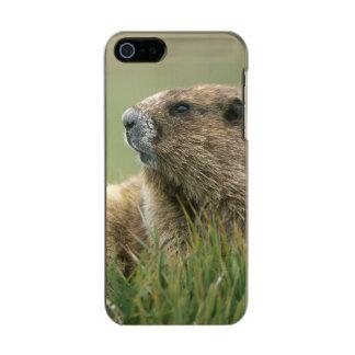 USA, Washington, Olympic NP, Olympic Marmot Incipio Feather® Shine iPhone 5 Case