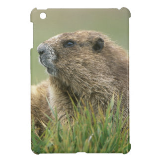 USA, Washington, Olympic NP, Olympic Marmot iPad Mini Cases