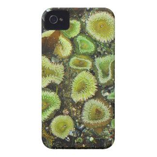 USA, Washington, Olympic Peninsula 4 Case-Mate iPhone 4 Case