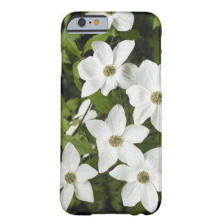 USA, Washington, Pacific Dogwood, Cornus Barely There iPhone 6 Case