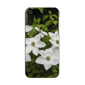 USA, Washington, Pacific Dogwood, Cornus Incipio Feather® Shine iPhone 5 Case