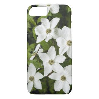 USA, Washington, Pacific Dogwood, Cornus iPhone 7 Case