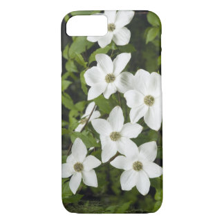 USA, Washington, Pacific Dogwood, Cornus iPhone 7 Case