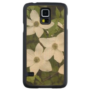 USA, Washington, Pacific Dogwood, Cornus Maple Galaxy S5 Slim Case