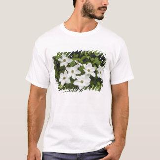 USA, Washington, Pacific Dogwood, Cornus T-Shirt