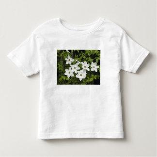 USA, Washington, Pacific Dogwood, Cornus T-shirts