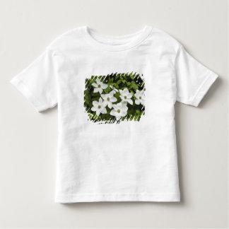 USA, Washington, Pacific Dogwood, Cornus Tee Shirt