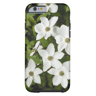 USA, Washington, Pacific Dogwood, Cornus Tough iPhone 6 Case