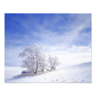 USA, Washington, Palouse Area, Frosted Black Photo Art