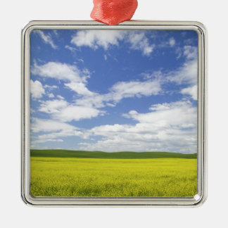 USA, Washington, Palouse Country, Blooming Silver-Colored Square Decoration