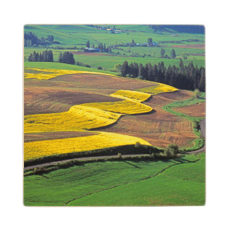 USA, Washington, Palouse, Whitman County 2 Wood Coaster