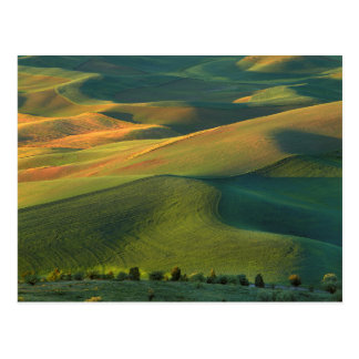 USA, Washington, Palouse, Whitman County Postcard