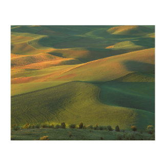 USA, Washington, Palouse, Whitman County Wood Canvases