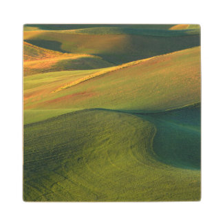 USA, Washington, Palouse, Whitman County Wood Coaster