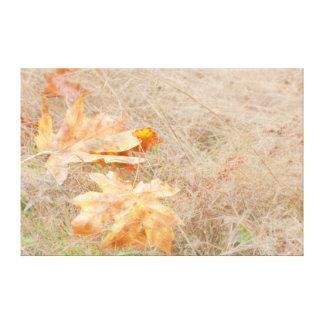 USA, Washington, Quinault. Maple Leaves Canvas Print