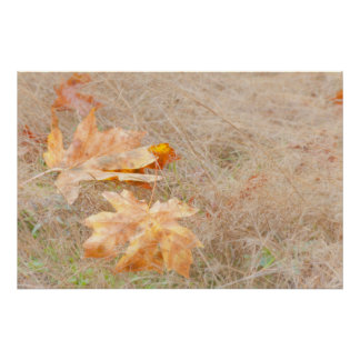 USA, Washington, Quinault. Maple Leaves Poster