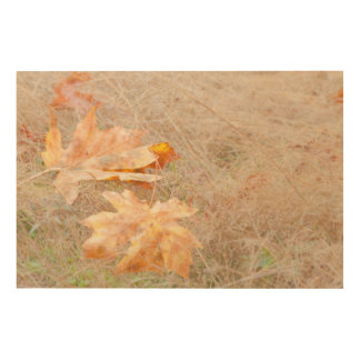 USA, Washington, Quinault. Maple Leaves Wood Canvases
