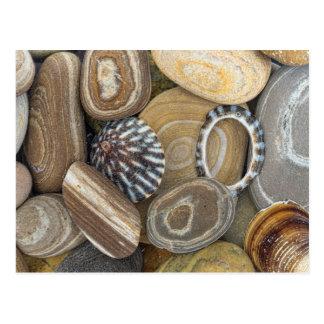 USA, Washington, Seabeck. Close-Up Of Beach Postcard