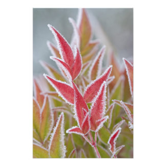 USA Washington Seabeck Close-up of frost on Photographic Print