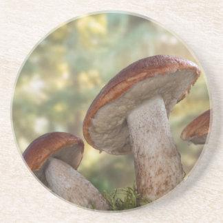 USA, Washington, Seabeck. Leccinum Insigne Coaster