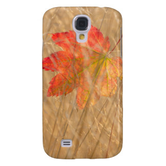 USA, Washington, Seabeck. Vine Maple Leaf Caught Galaxy S4 Case