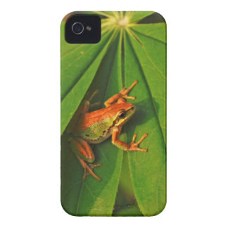 USA, Washington, Seattle, Discovery Park 2 Case-Mate iPhone 4 Cases