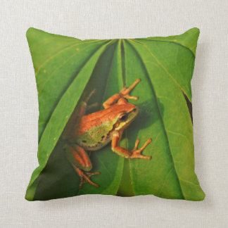 USA, Washington, Seattle, Discovery Park 2 Cushion