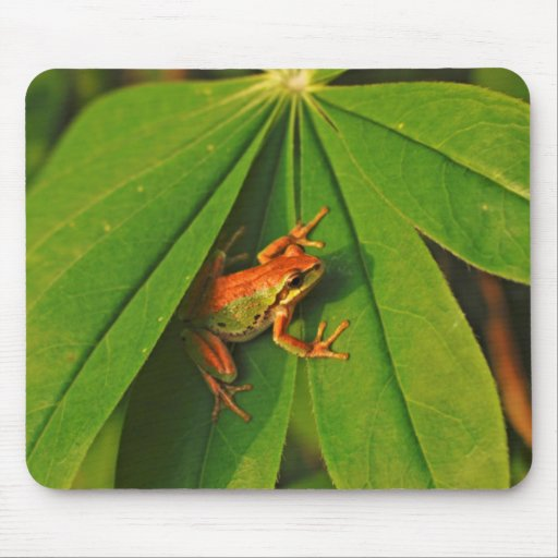 USA, Washington, Seattle, Discovery Park 2 Mouse Pads
