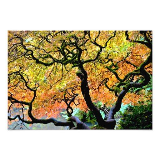USA, Washington, Seattle, Kubota Garden. Photo Print