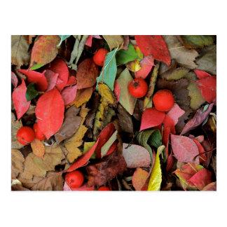 USA, Washington, Spokane Co., Hawthorn Leaves Postcard