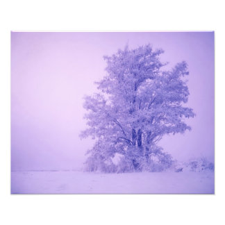 USA, Washington, Spokane County, Frosted Photo Print