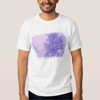 USA, Washington, Spokane County, Frosted Tee Shirts