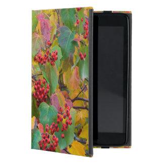 USA, Washington, Spokane County, Hawthorn Leaves 2 iPad Mini Cover