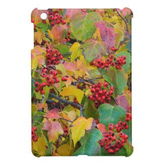USA, Washington, Spokane County, Hawthorn Leaves 2 iPad Mini Covers
