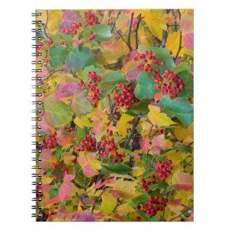 USA, Washington, Spokane County, Hawthorn Leaves 2 Notebook