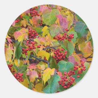 USA, Washington, Spokane County, Hawthorn Leaves 2 Round Sticker