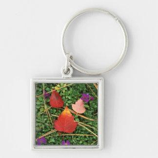 USA, Washington, Spokane County, Hawthorn Leaves 3 Silver-Colored Square Key Ring