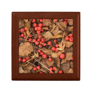 USA, Washington, Spokane County, Hawthorn Leaves Gift Box