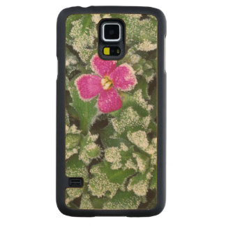 USA, Washington, Spokane County, Rockress Maple Galaxy S5 Case
